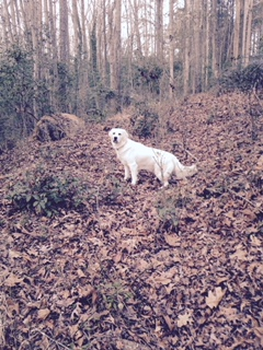 Woods3