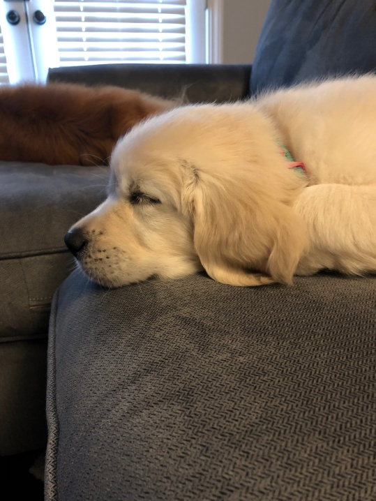 Sleeping on the sofa!