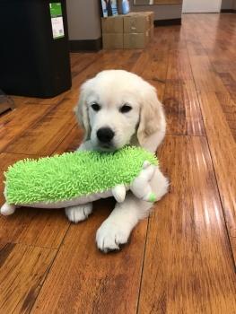 I'm loving my big green toy!