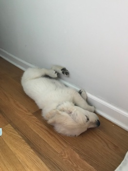 I'm having a great nap right here!